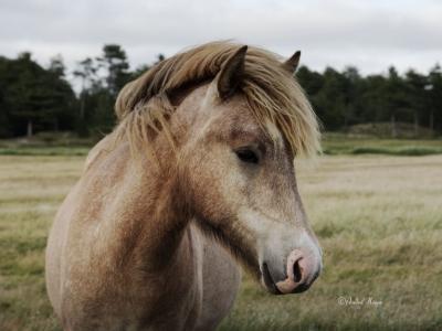 Pferd im Park von Marbeak