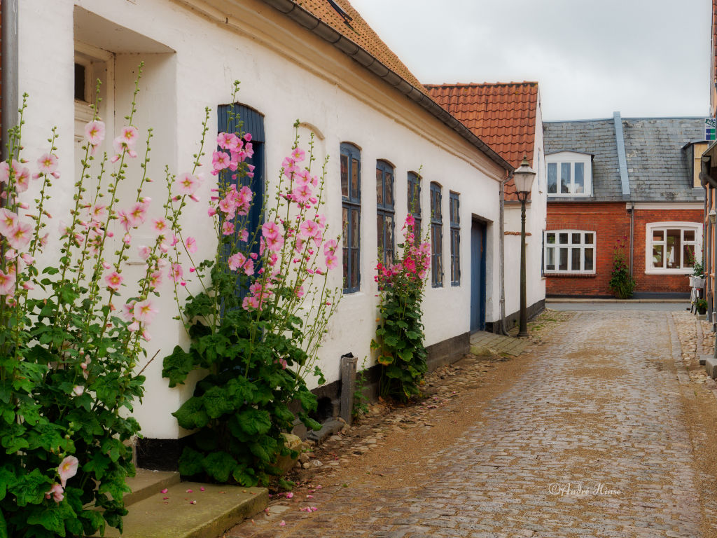 Haus in Ribe mit Blumen