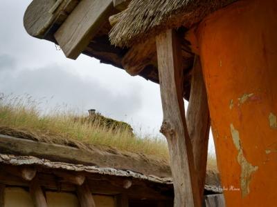 Dachbepflanzung eines Hauses im Freilichtmuseum Ribe