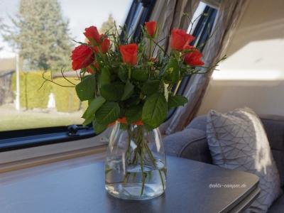 In einem englischen Wohnwagen gehören immer Blumen