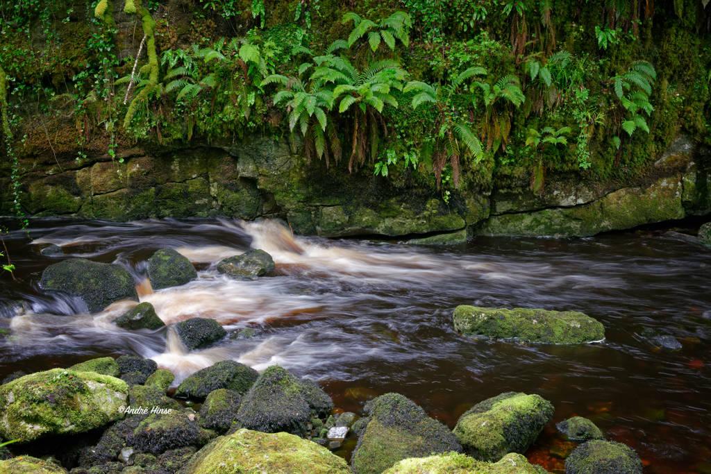 Wanderweg an einem wilden Bach in Nordirland