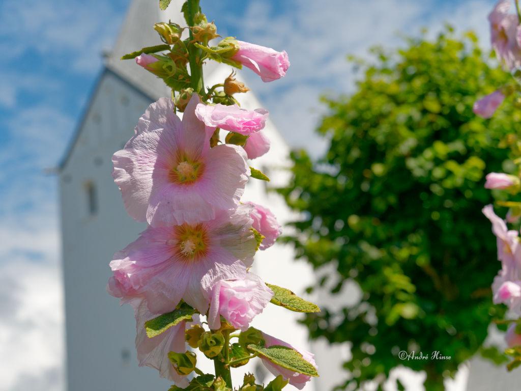 Florale Pracht