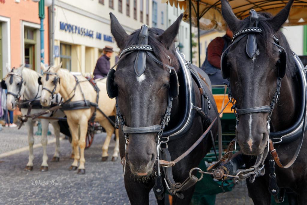 Pferde am Markt