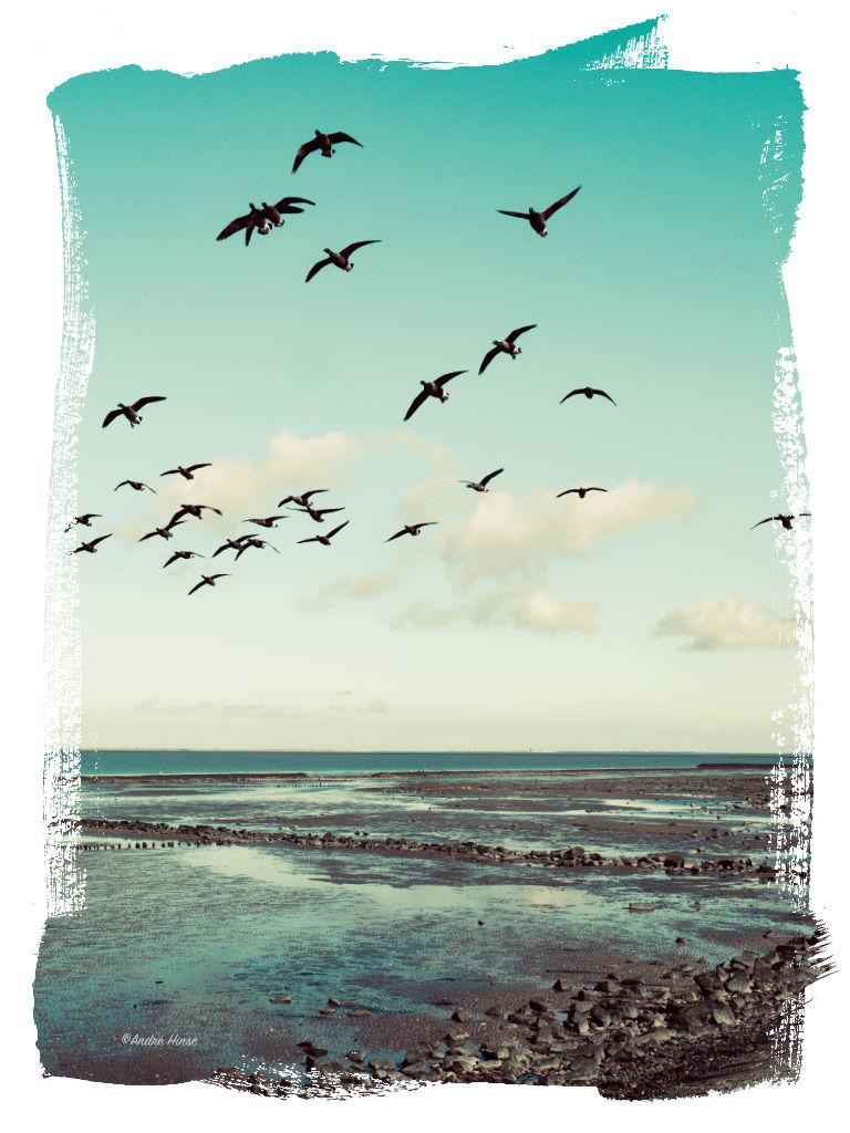 Gänse an der Nordseeküste