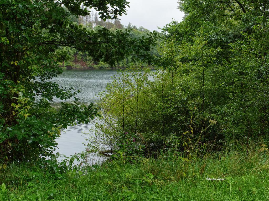 Ufer der Genkeltalsperre